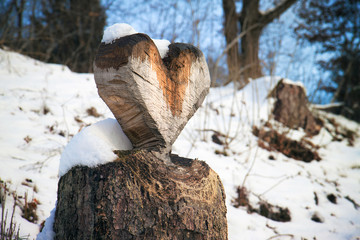 wooden heart, emblem of love in woodland