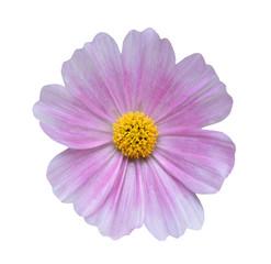 Fond de hotte en verre imprimé Univers Cosmos flower on white background