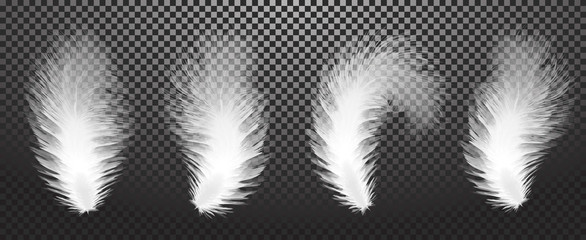 The falling twirled realistic feathers isolated on a transparent background. Easy style, can be used in flyers, banners, a web. Elements for design. Vector illustration. EPS 10.