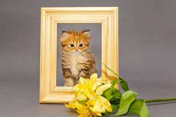 Little kitten in  photo frame