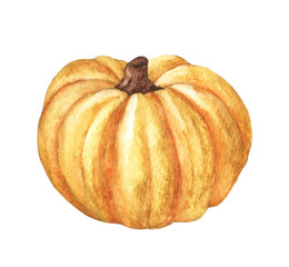Pumpkin. Hand drawn watercolor painting on white background. Isolated organic natural eco illustration