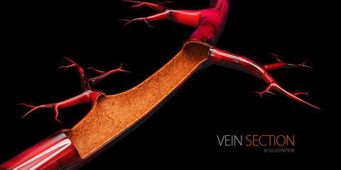 3d Illustration of vein without blood cell, isolated black
