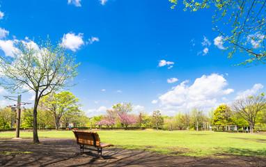 青空と新緑の公園