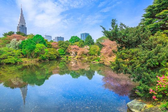 The Japanese Garden inside Shinjuku Gyoen, Shinjuku District, Tokyo, Japan in spring. Yoyogi skyline on background reflecting on the large pond. Shinjuku Gyoen is most popular park in Tokyo.