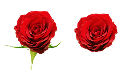 Set of red rose flowers