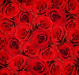 Red rose flowers for background
