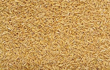 Texture of ripe oat grains