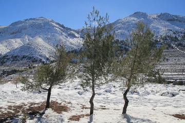 Winter an der Costa Blanca
