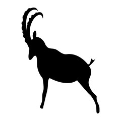 Isolated black silhouette of a mountain goat (Alpine Ibex) with curved horns - Eps10 vector graphics and illustration