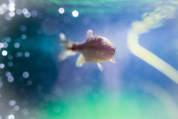 Fish swimming in aquarium