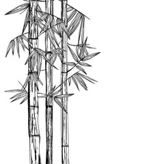 Vector isolated hand drawn illustration of bamboo plant. Black and white background. Design for print, asian spa and massage, cosmetics package, furniture materials.