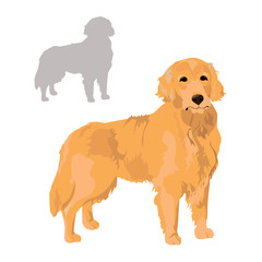 Golden retriever and silhouette isolated on white background. Labrador pet for your design. Yellow dog as a symbol of year 2018.