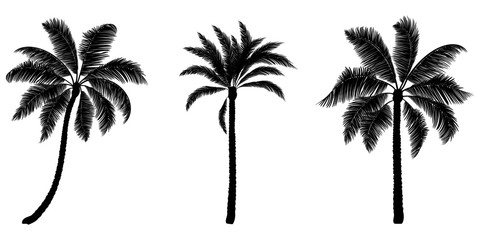Set of black vector palm. Hand drawn trees.