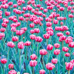 Nature Spring Floral Walpaper