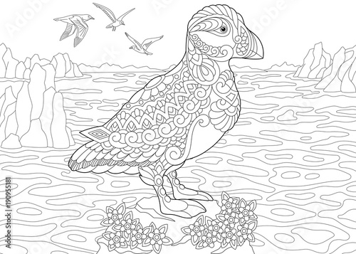 Coloring Page Adult Book Puffin A Hole Nesting Auk Seabird