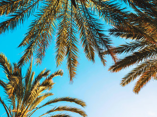 Palms against blue sky, Palm trees at tropical coast, vintage toned and stylized, coconut tree, summer, retro