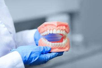 Denture picture with the best focus on teeth. Dentist holding tooth model during a presentation. Teeth orthodontic dental model or human jaw.  Selective focus on teeth.