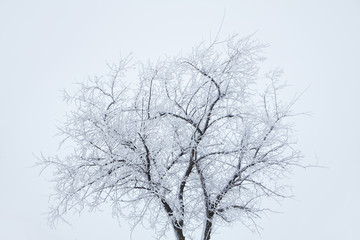 cold winter scenery with tree covered by snow