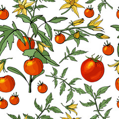 Seamless pattern with different vegetables on white. Various sorts of tomato