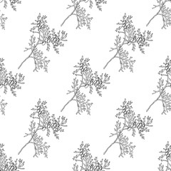Seamless pattern with branches on thuja. Black and white endless texture