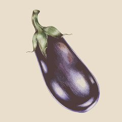 Illustration of eggplant isolated on background