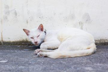 Cat white on the concrete.