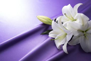 紫色のサテンと白いユリ