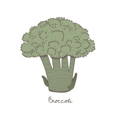 A green broccoli isolated on background