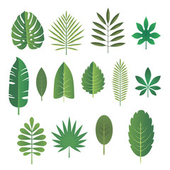 Set of green leaves of tropical plants. Vector illustration.