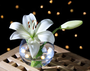 White lily in a glass