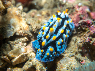 nudibranch on the coral