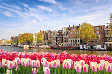 Canvas Prints Amsterdam Amsterdam city skyline at canal waterfront with spring tulip flower, Amsterdam, Netherlands