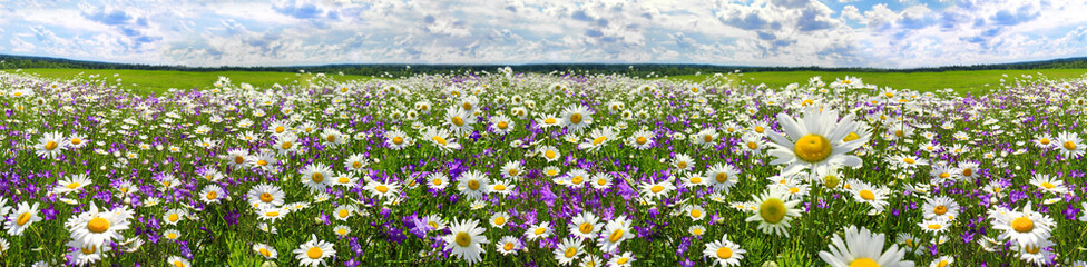 Poster Spring spring landscape panorama with flowering flowers on meadow