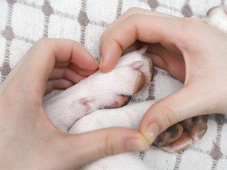 A girl holding a white dog's paws.