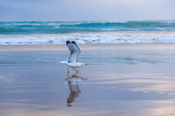 Seagull soars from the ocean coast at sunset, beautiful ocean landscape