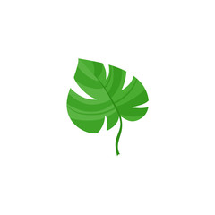 Vector flat summer symbol - tropical green monstera leaf icon. Isolated floral illustration on a white background for advertising, poster design.