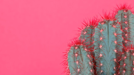 Photo sur Aluminium Cactus Trendy pastel pink coloured minimal background with cactus plant. Cactus plant close up. Fashion style cacti concept.