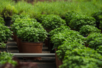 plants in plastic trays and boxes ready for sell