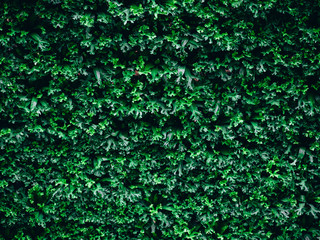 great green bush of fern in the forest, nature green background