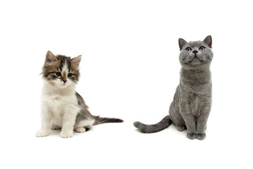 beautiful kittens isolated on white background