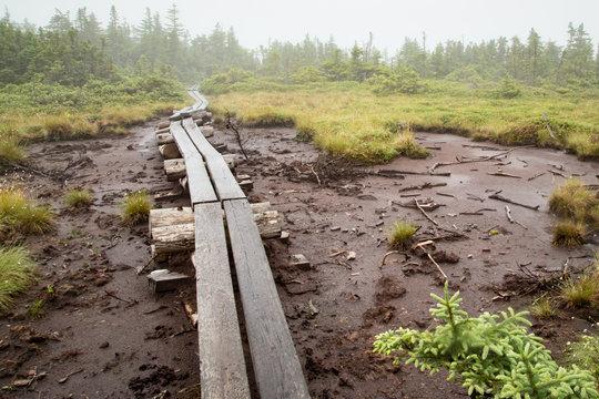 Planks through the mud