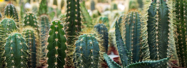 Photo on textile frame Cactus cactus garden desert in springtime.