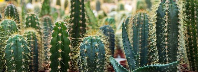 cactus garden desert in springtime.