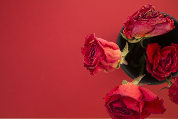 red roses in a black vase on a red background