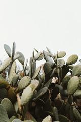 Planta grande de cactus natural en colina de pueblo