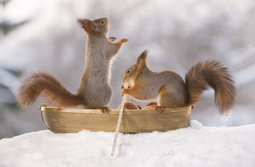two Red squirrels with an oar in rowing boat