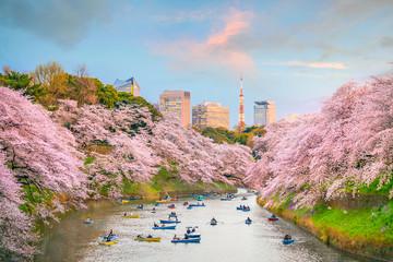 Chidorigafuchi park in Tokyo during sakura season Wall mural