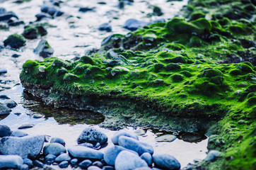 green surface of stone beach near the sea