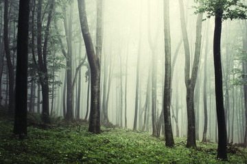 misty forest with green plants, nature background