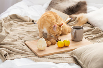 Fototapete - red tabby cat sniffing food on bed at home